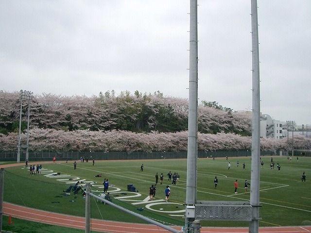 国学院サッカーグランドの桜