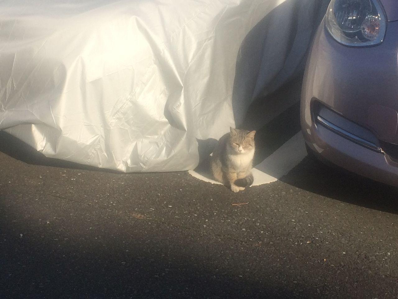 たまプラーザ団地の駐車場の猫