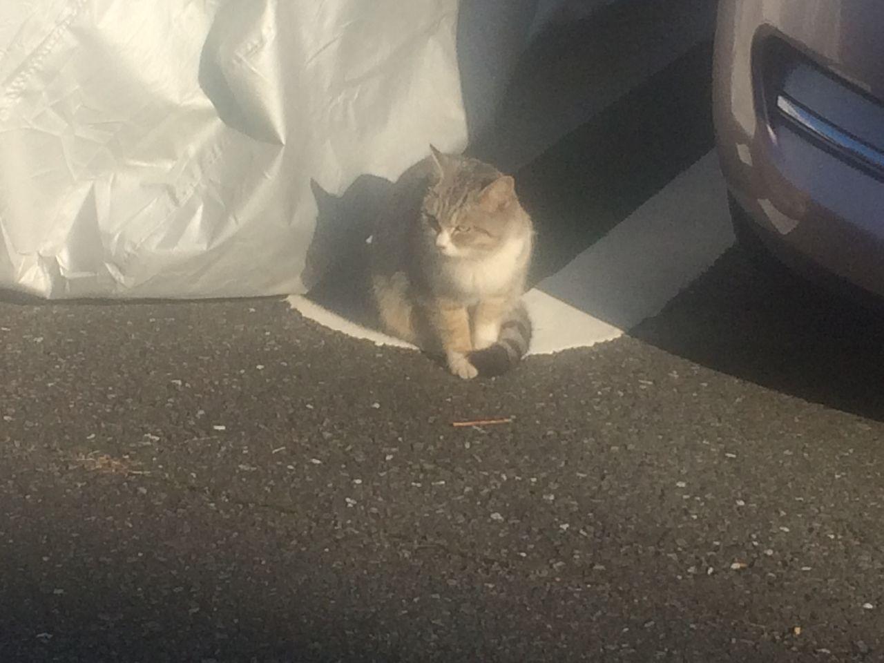 たまプラーザ団地で見かけた猫