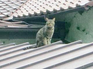 屋根に猫がいました。
