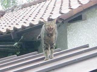 ネコの大きなアクビ