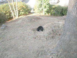 たまプラーザのネコ
